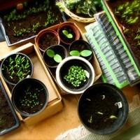 Время посадки и сбора овощей