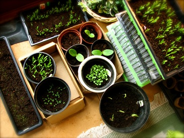 Как сделать схему посадки овощей на.