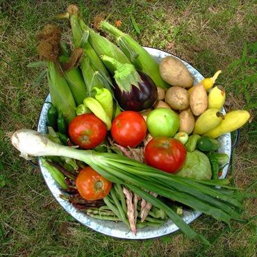 Урожай овощей