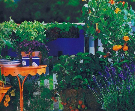 На балконе чаще всего выращивают